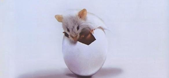 Triumvirat-RAT